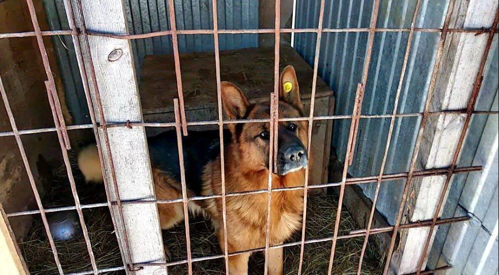 Бездомная пропасть: почему откладывается открытие приютов для животных