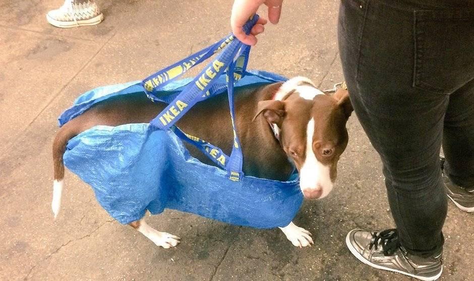Можно ли в метро с собакой: немного о наболевшем