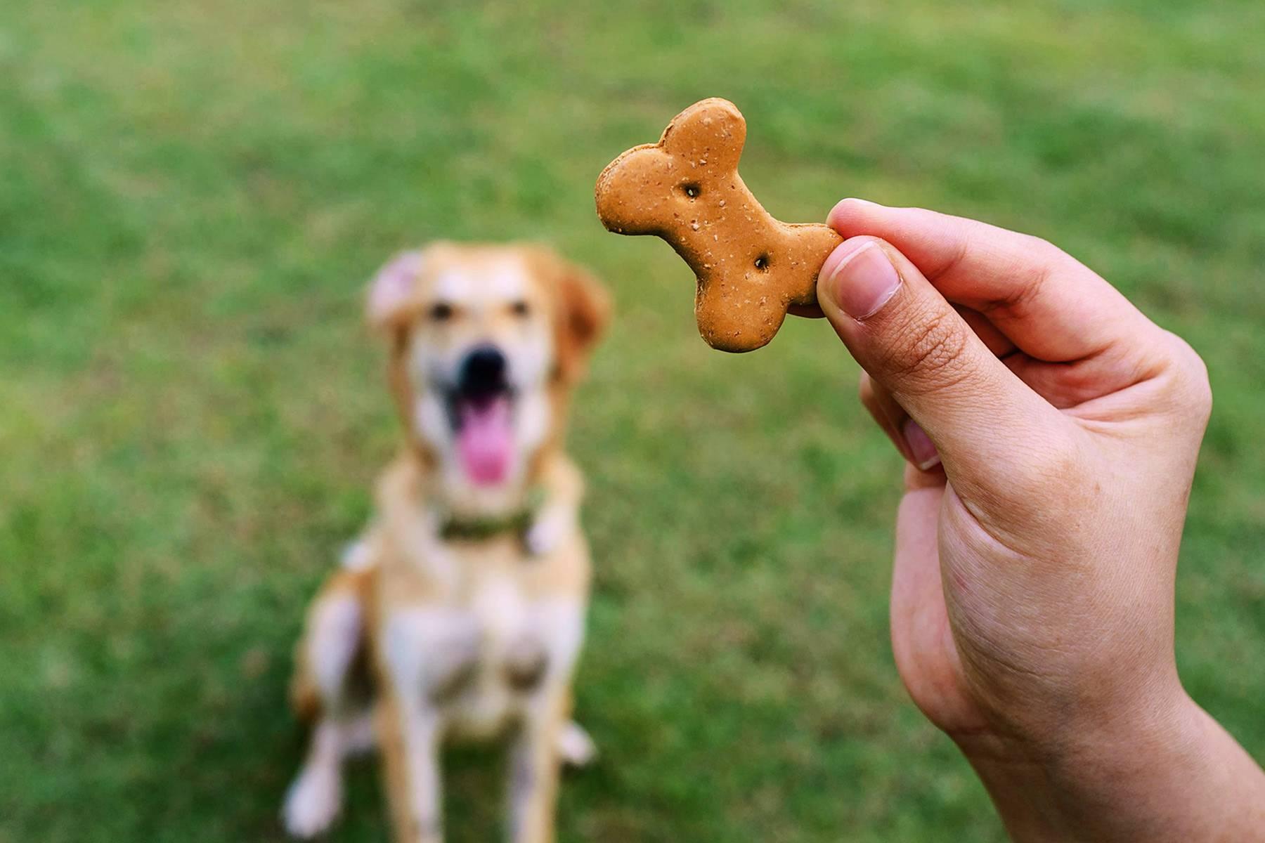 4 самых эффективных лакомства для дрессировки собаки