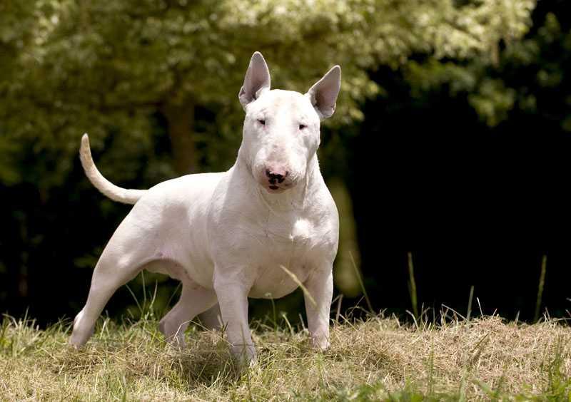 Собака с крысиной мордой: как называется порода, каковы ее особенности?