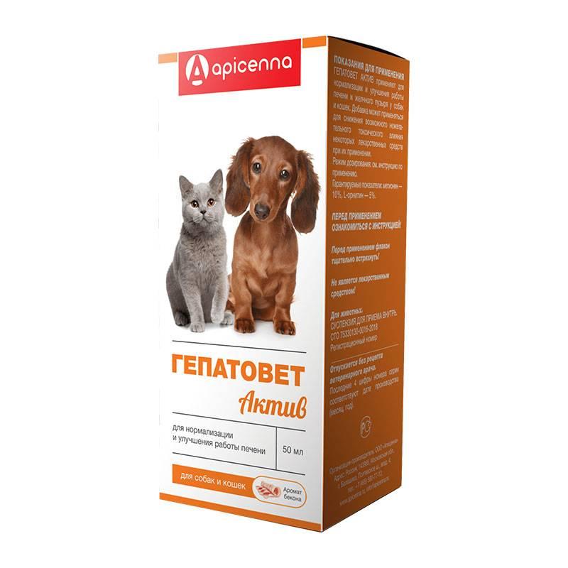 Гепатоджект для кошек и собак: свойства и особенности состава, инструкция по применению и противопоказания
