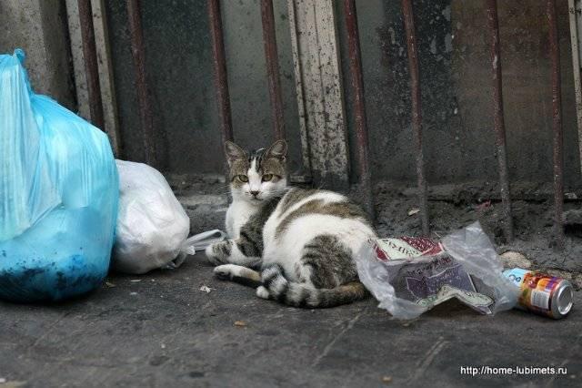 Удивительная история жизни толстого кота по имени базука, которая увлекает сильнее многих приключенческих романов