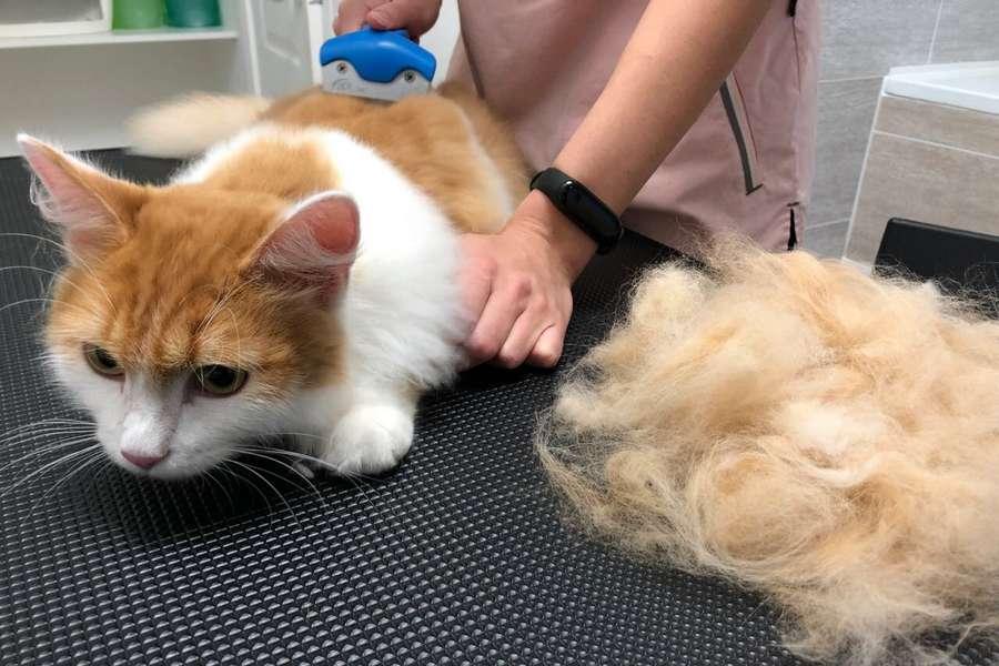 Как подстричь кота самостоятельно в домашних условиях и как успокоить перед стрижкой