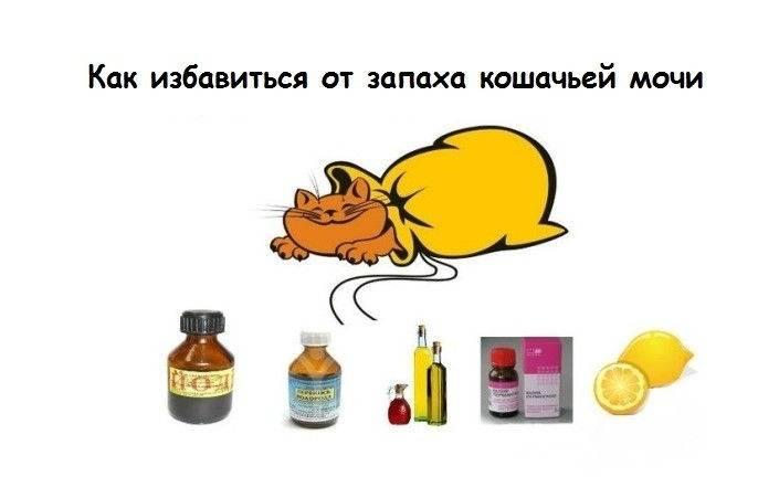 Как избавиться от запаха кошачьей мочи: народные и специальные средства