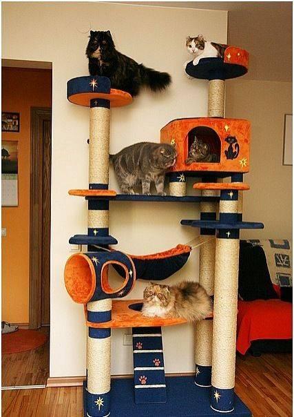 Кошке лучше дома или на улице: что говорят ученые?