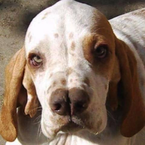 Двуносая собака каталбурун