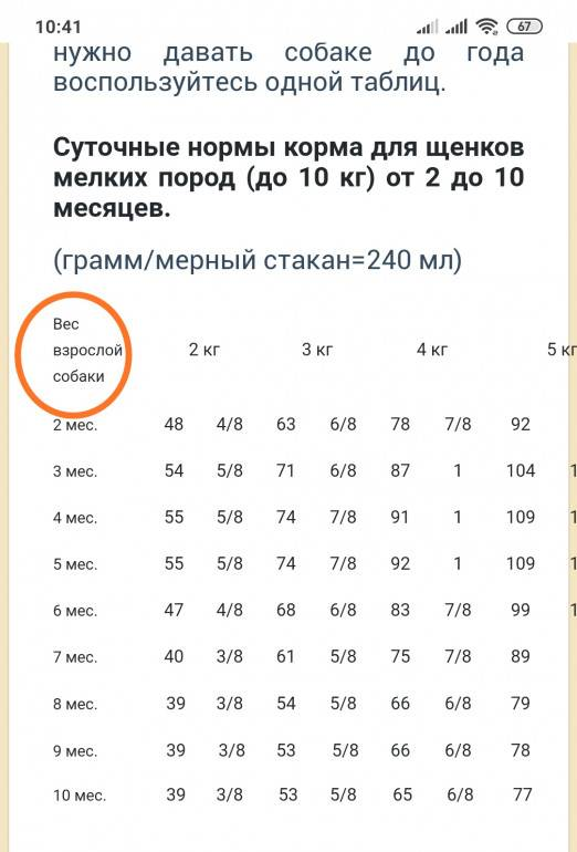ᐉ лабрадор вес и рост взрослой собаки - zoomanji.ru