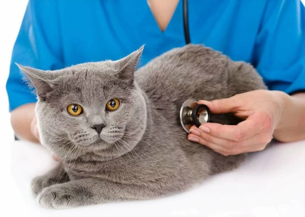 Всё о методах кастрации кота. кастрация котов в ветеринарной клинике санавет, г. москва