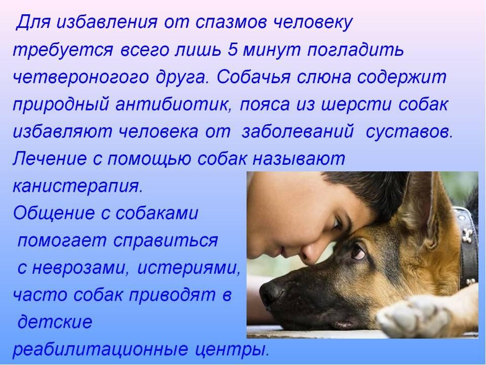 Понимают ли собаки человеческую речь: интересные фаты, эксперименты и доказательства