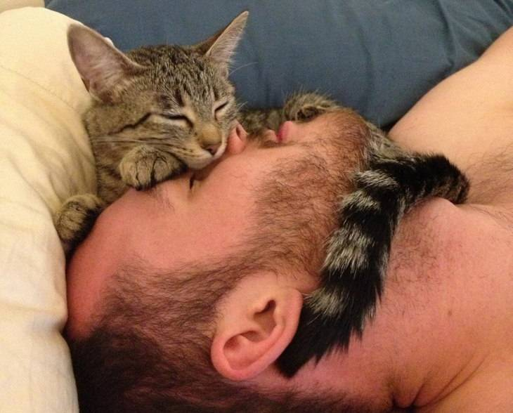 Почему кошка спит в ногах у человека? приметы о кошках
