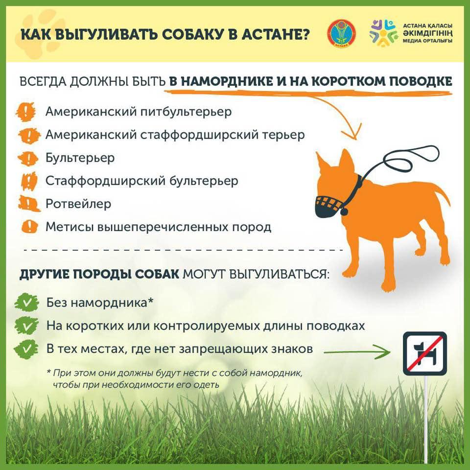 Правила содержания и выгула собак по новому закону