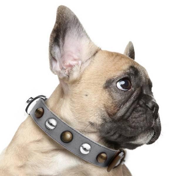 Как надеть намордник на собаку, в том числе агрессивную. почему правильно говорить что его надевают, а не одевают