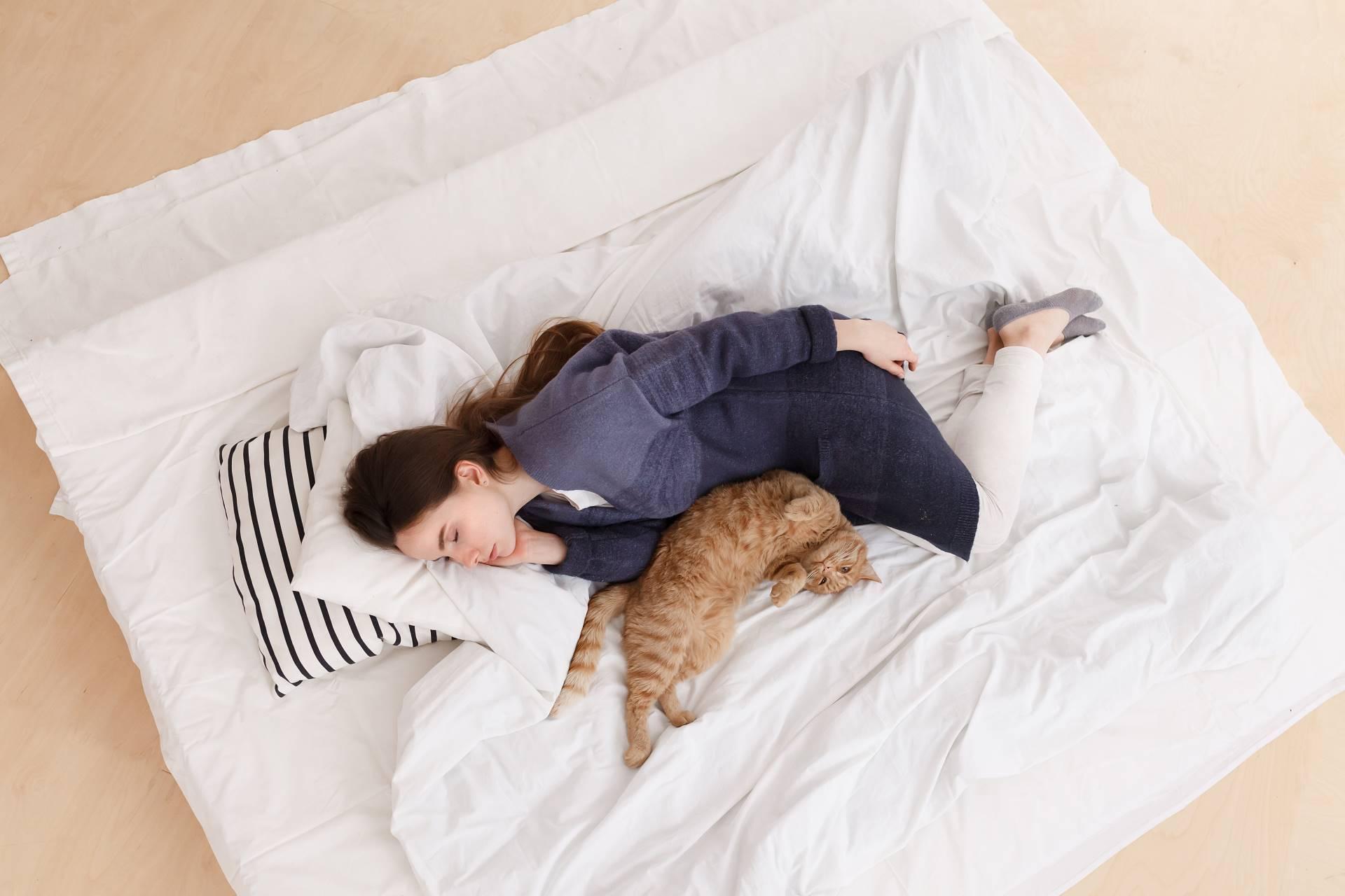 Почему кошки спят с хозяевами: причины, что делать