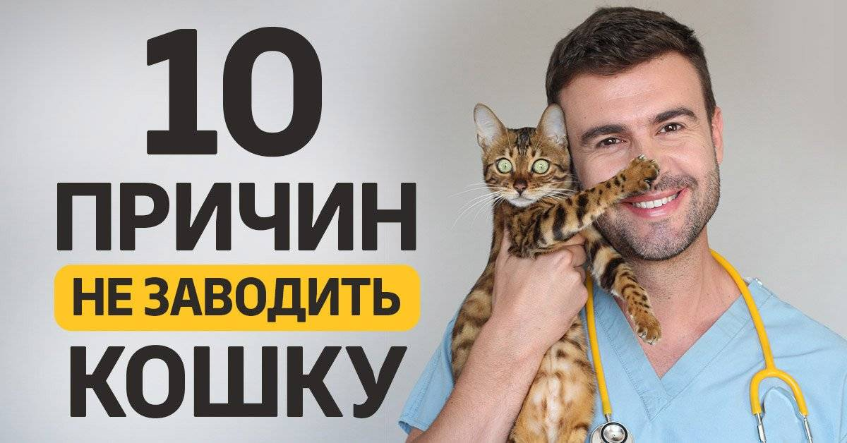 10 причин завести кота