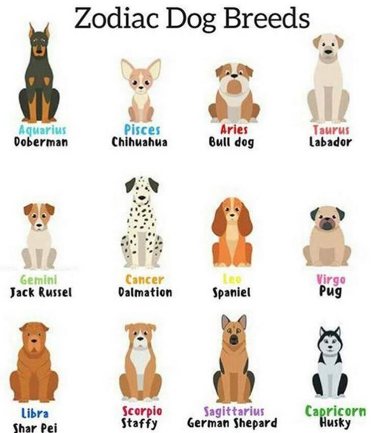 Какая собака подходит по знаку зодиака? как выбрать породу по знаку зодиака?