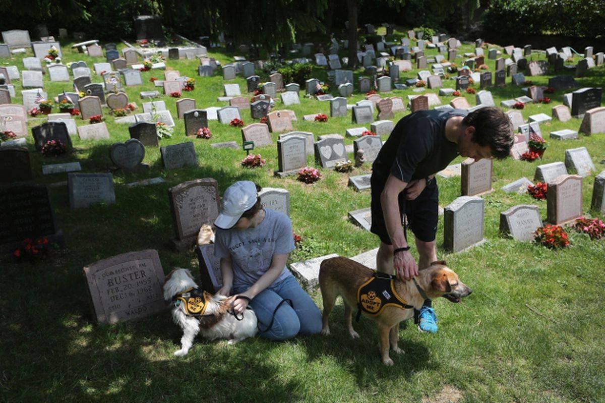 Как и где похоронить собаку: делаем все по правилам и законам