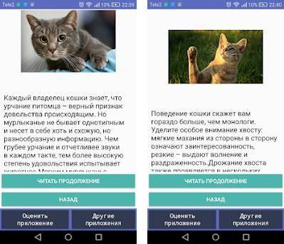 Как понять язык кошек: по хвосту, глазам, мяуканью