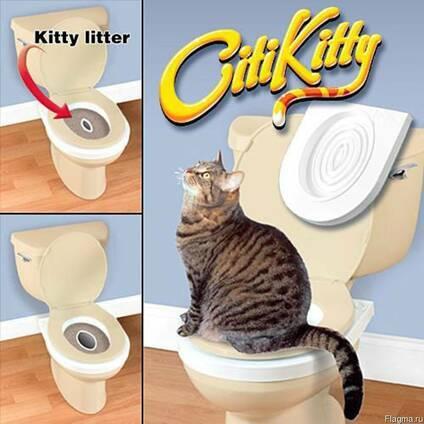 Лучшие умные туалеты для кошек