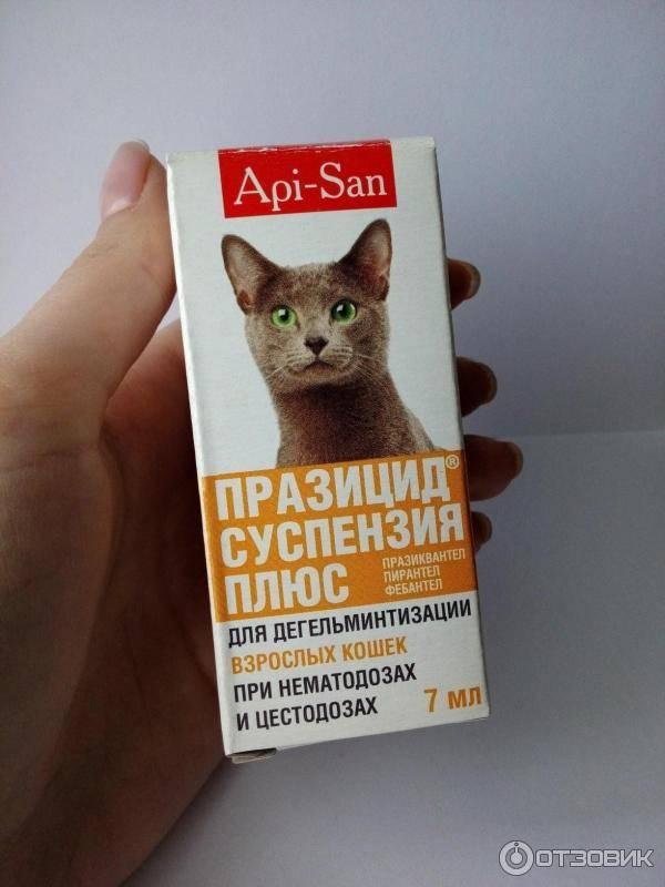 Глисты у животных: как обнаружить и лечить?