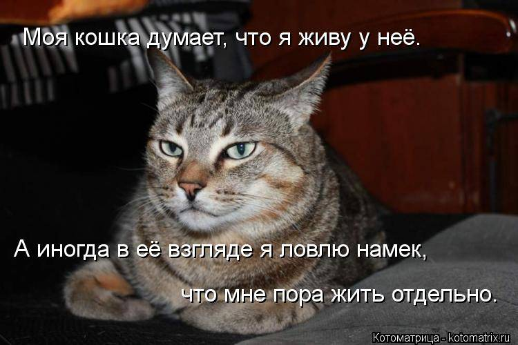 Как кошки благодарят своих хозяев - gafki.ru