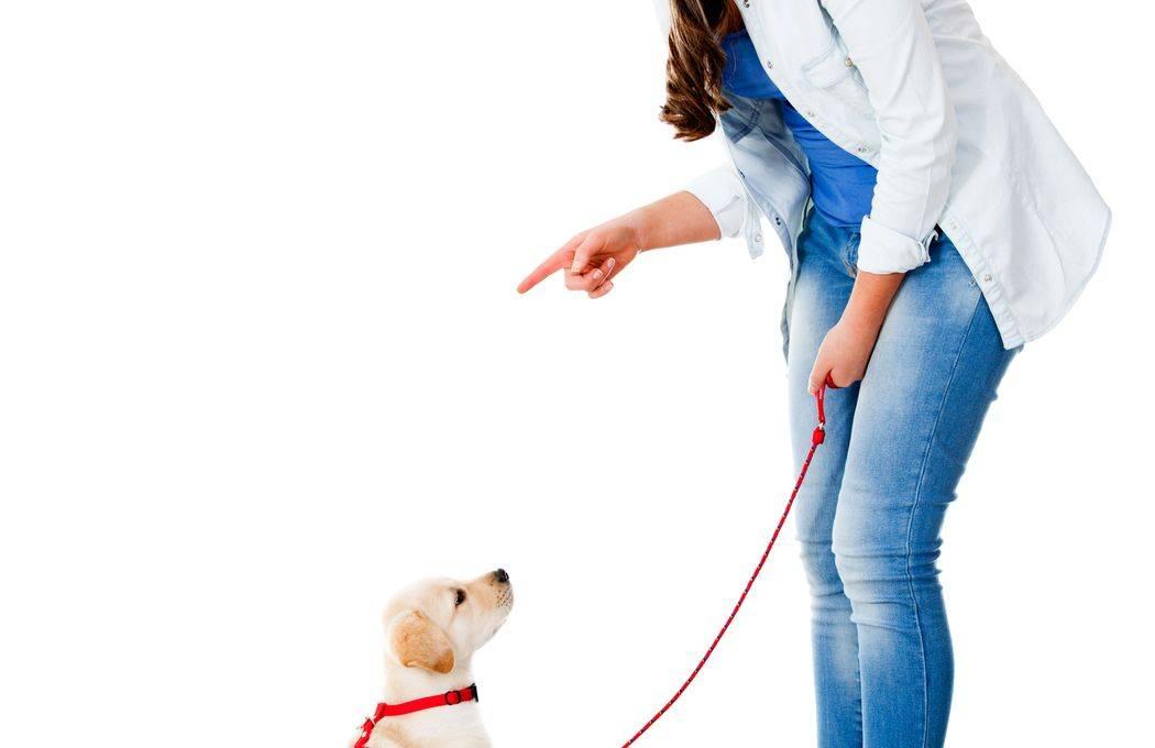 Как научить собаку правилам погулки самостоятельно удавкой