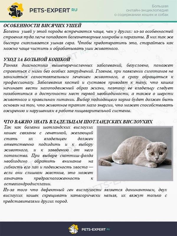 Вязка кошек: подготовка и проведение