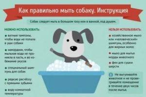 Мопс: как нужно ухаживать за собакой, чтобы она была здорова