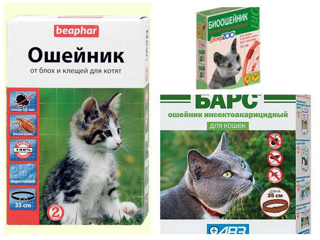 Ошейник от блох для кошек: действие, виды, последствия