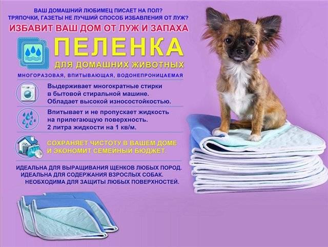 Многоразовые пеленки для собак и щенков — особенности выбора и использования