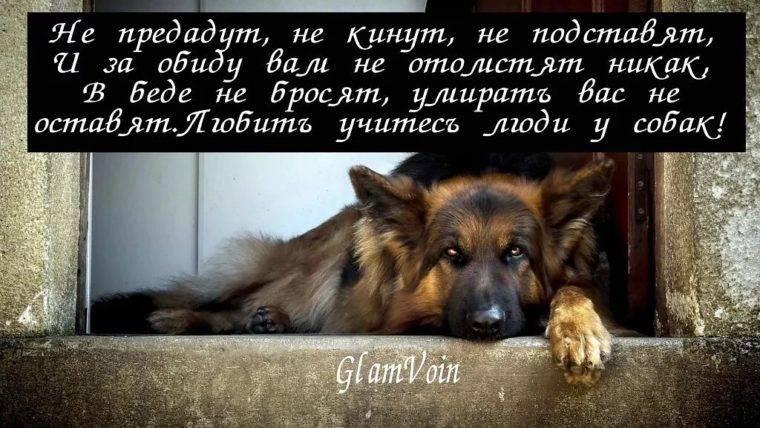 Почему собака стала агрессивной: виды агрессии у собак в зависимости от причины, 3 способа решения проблемы
