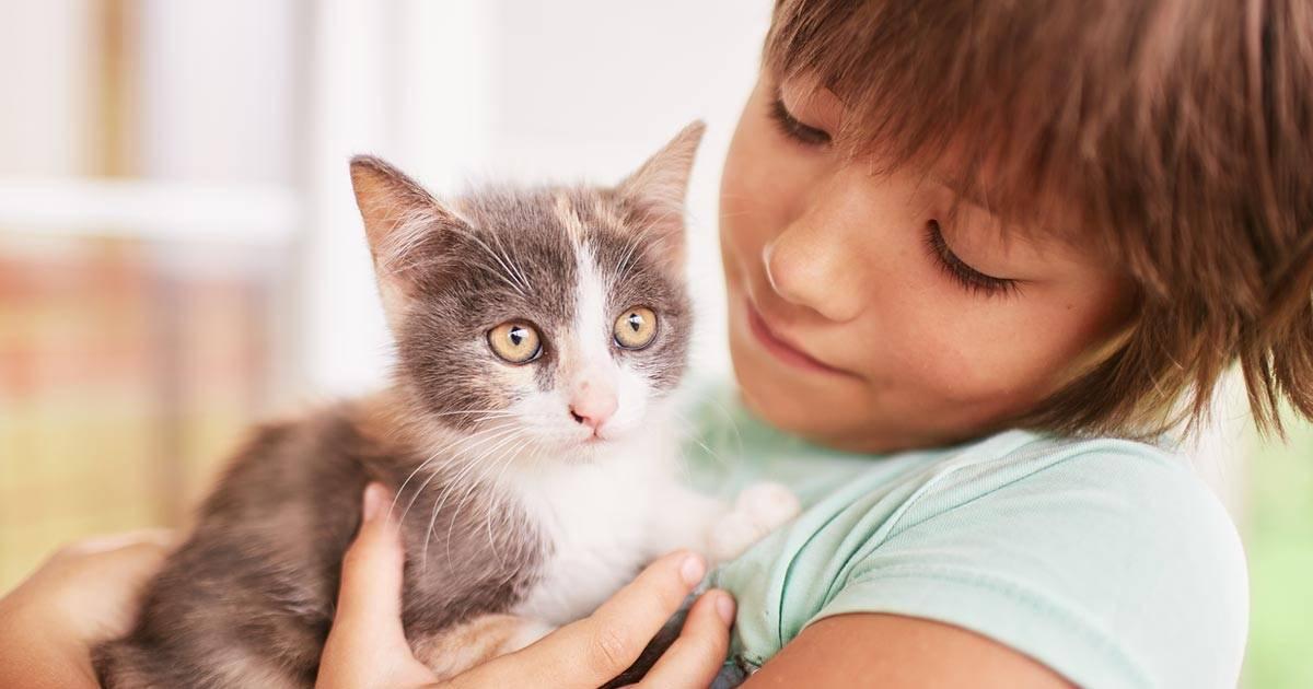 Как улучшить отношения со своей кошкой
