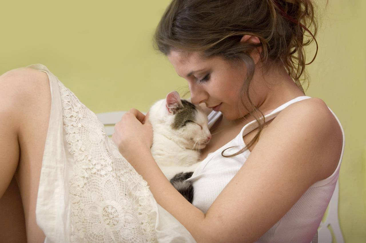 Как понять кошку? зоопсихолог о том, что на самом деле чувствуют наши домашние животные