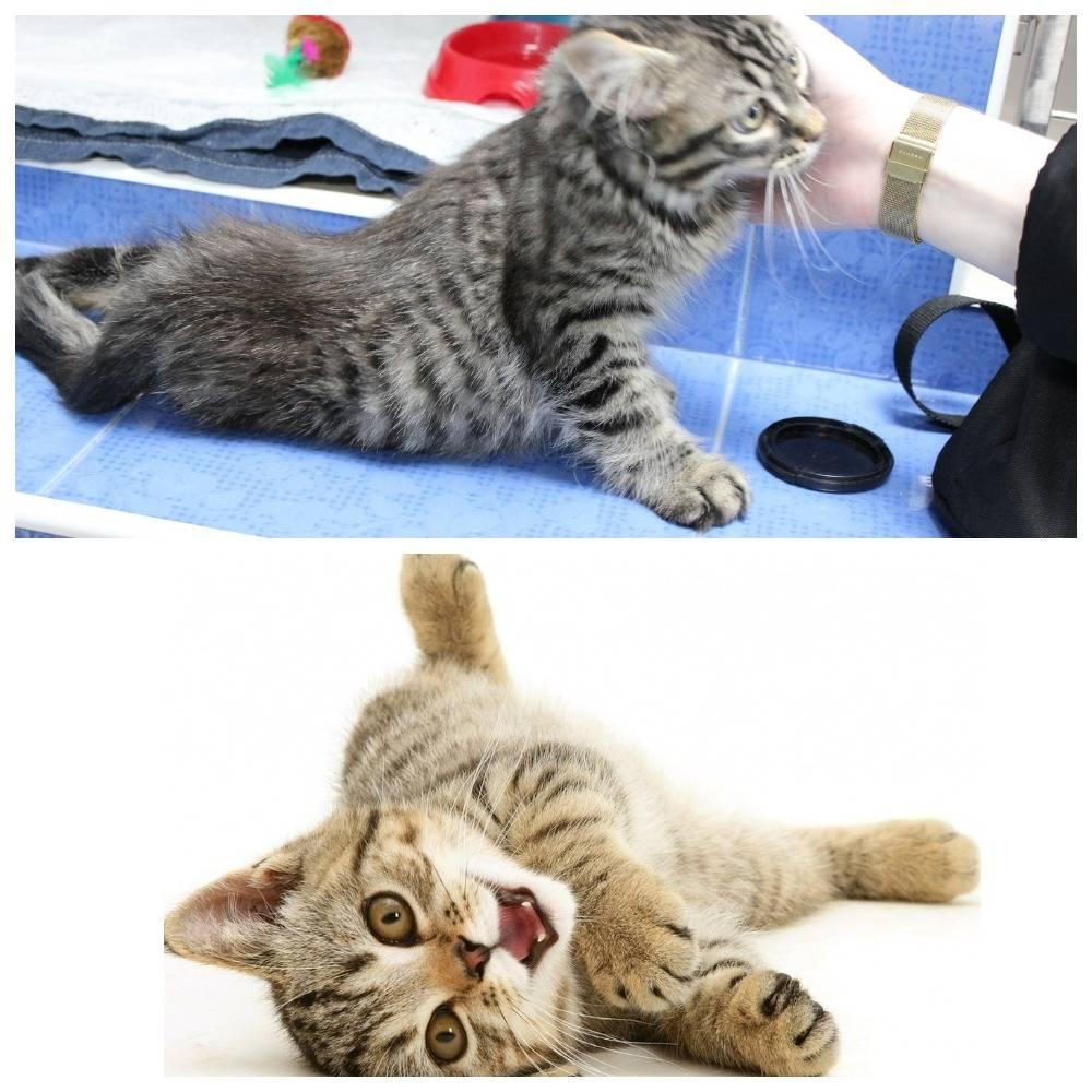 Почему кошки топчут нас лапками и ещё удивительные факты из жизни кошек — pet-mir.ru