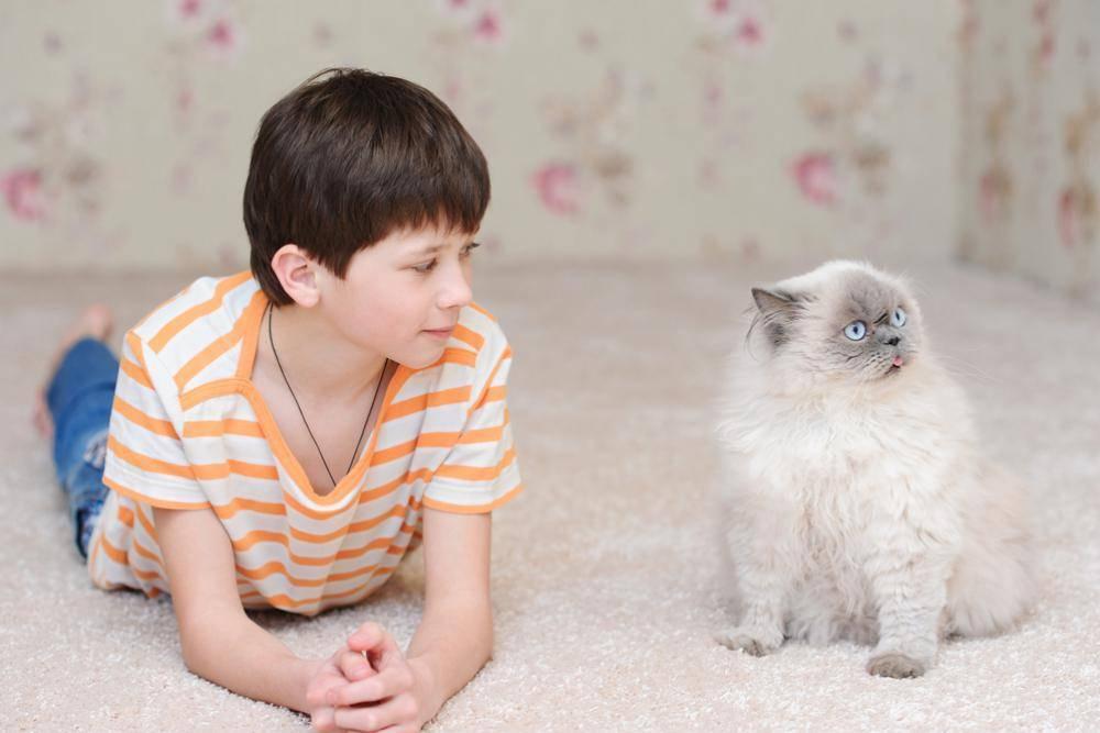Кого выбрать: кота или кошку