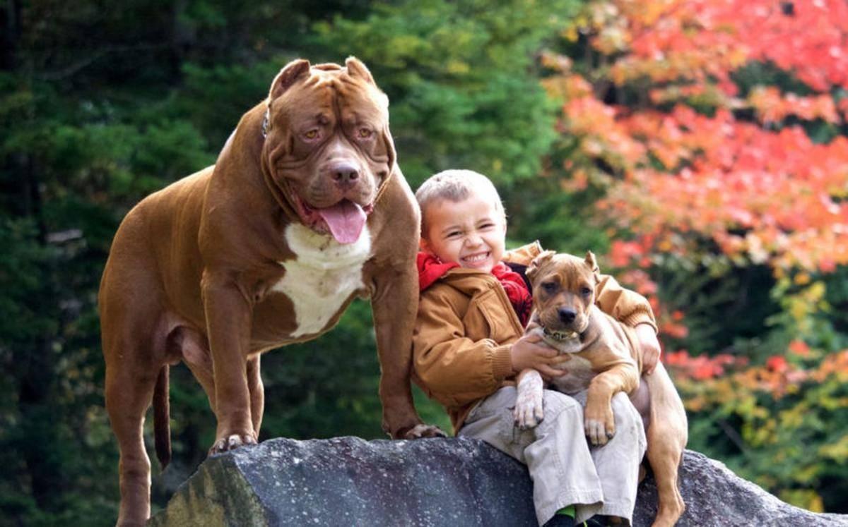 Самые послушные породы собак: названия и фото