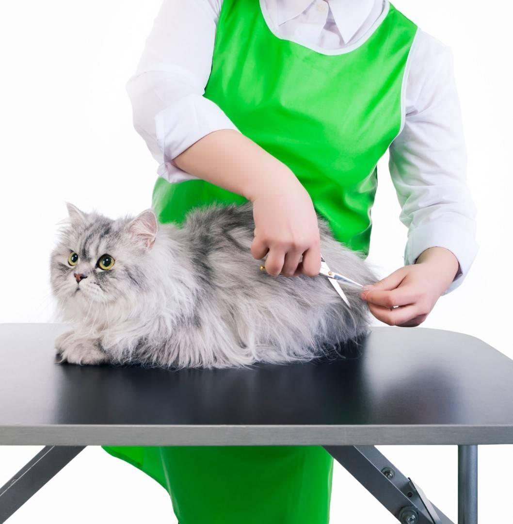 Груминг кошек: особенности стрижки на дому груминг кошек: особенности стрижки на дому