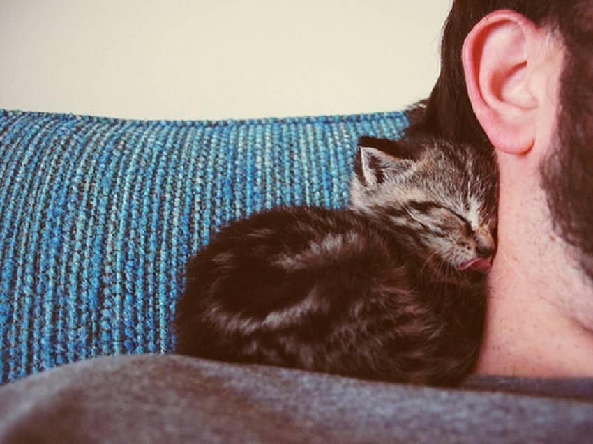 Почему кошка много спит: нормы сна у взрослых и маленьких животных
