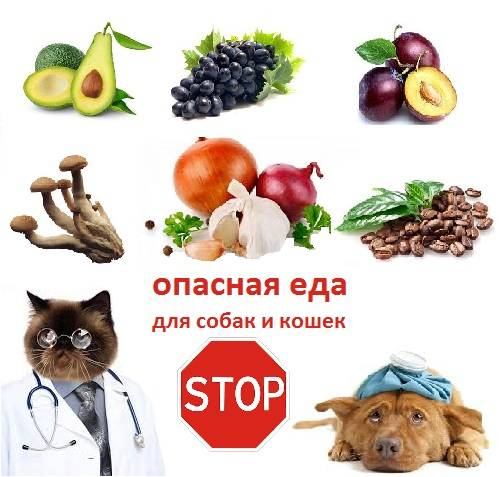 Питание собак и кошек: можно ли кормить человеческой едой домашних животных