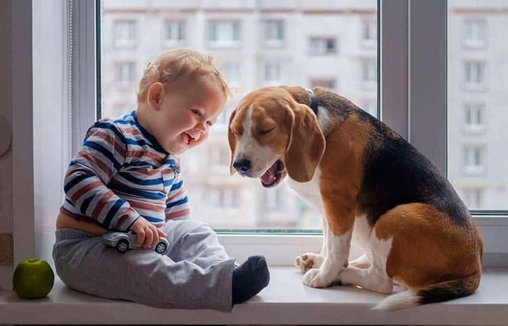 Топ-10 лучших собак для детей: как выбрать породу для ребёнка