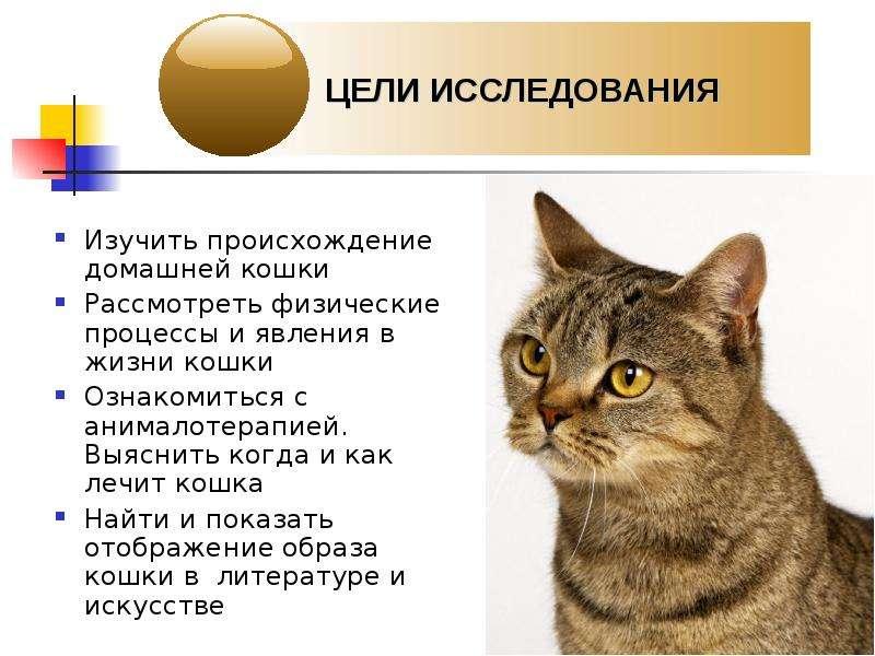 Сколько живут кошки в зависимости от породы, стерилизации и кастрации