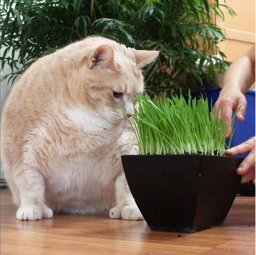 7 причин почему кот худеет, но ест хорошо – что делать