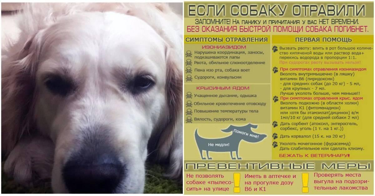 Облысение (алопеция) у собак и кошек | ветеринарная клиника бэст в новосибирске