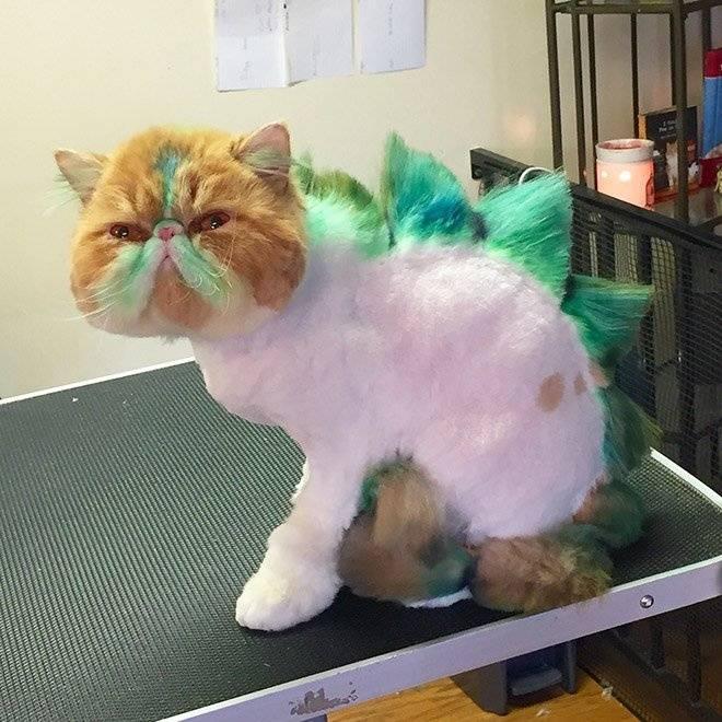 В каких случаях нужен грумер для кошек?