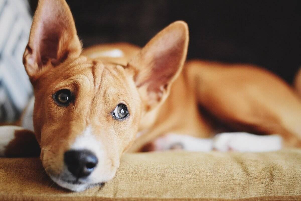 Собаки, которые редко лают