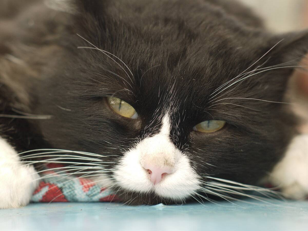 Пример как называются усы у кошки по-научному, зачем они нужны питомцу
