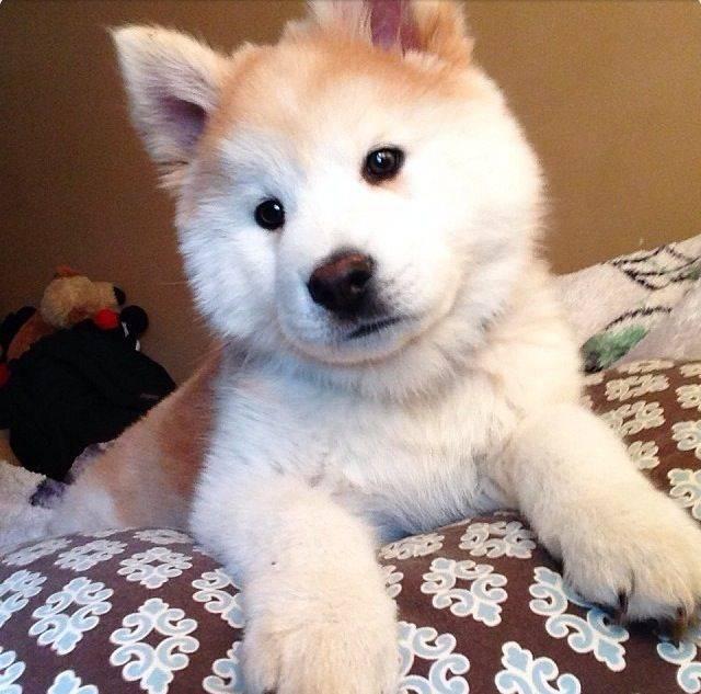 Собаки метисы: описание и содержание
