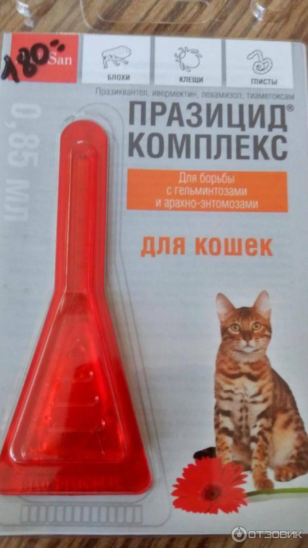 Блохи у кошек: что делать, симптомы, лечение, как избавиться