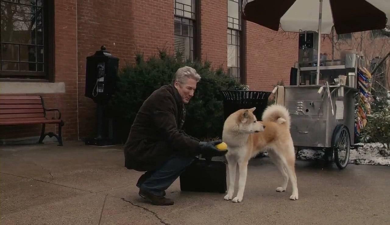 Порода собаки из фильма хатико — акита-ину (фото и цена)