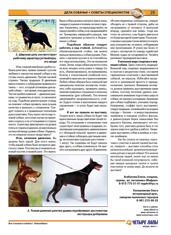 Хождение собаки на ринговке. выбор стойки для показа. что требуется от хендлера и собаки?