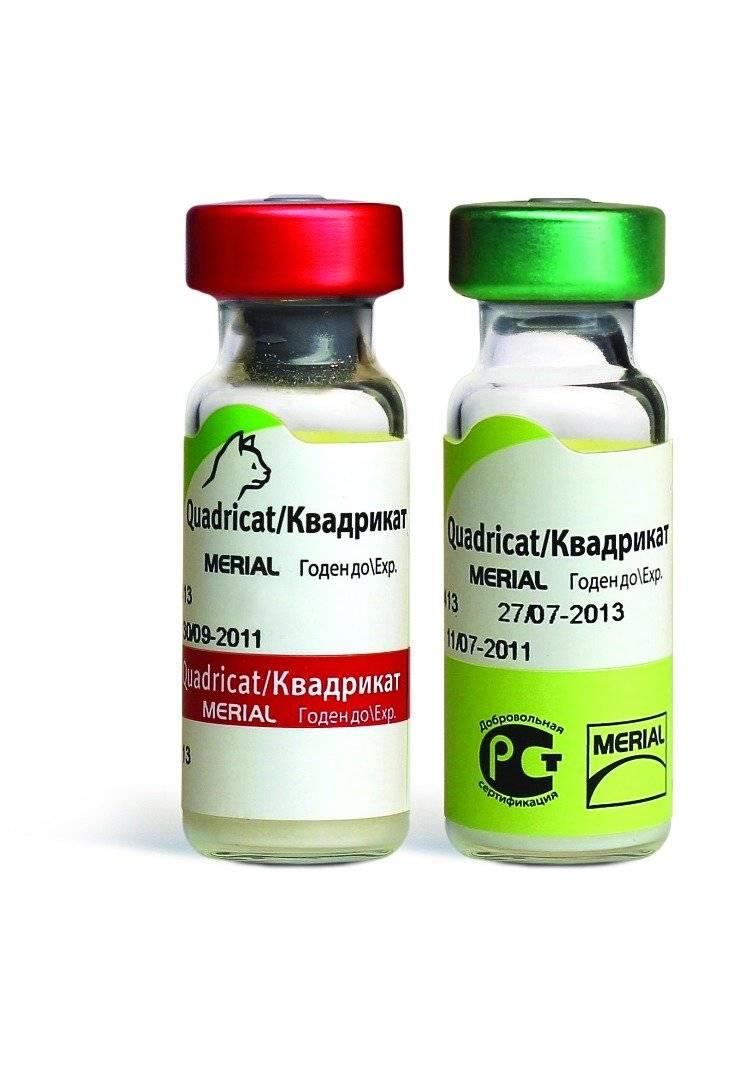 Комплексная прививка для кошек: что входит, отзывы, цена